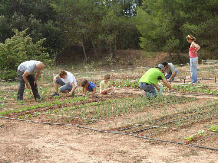 A L'EcoRebanyà (a Òdena) Es Lloguen Parcel·les Per Fer-hi Agricultura Ecològica.